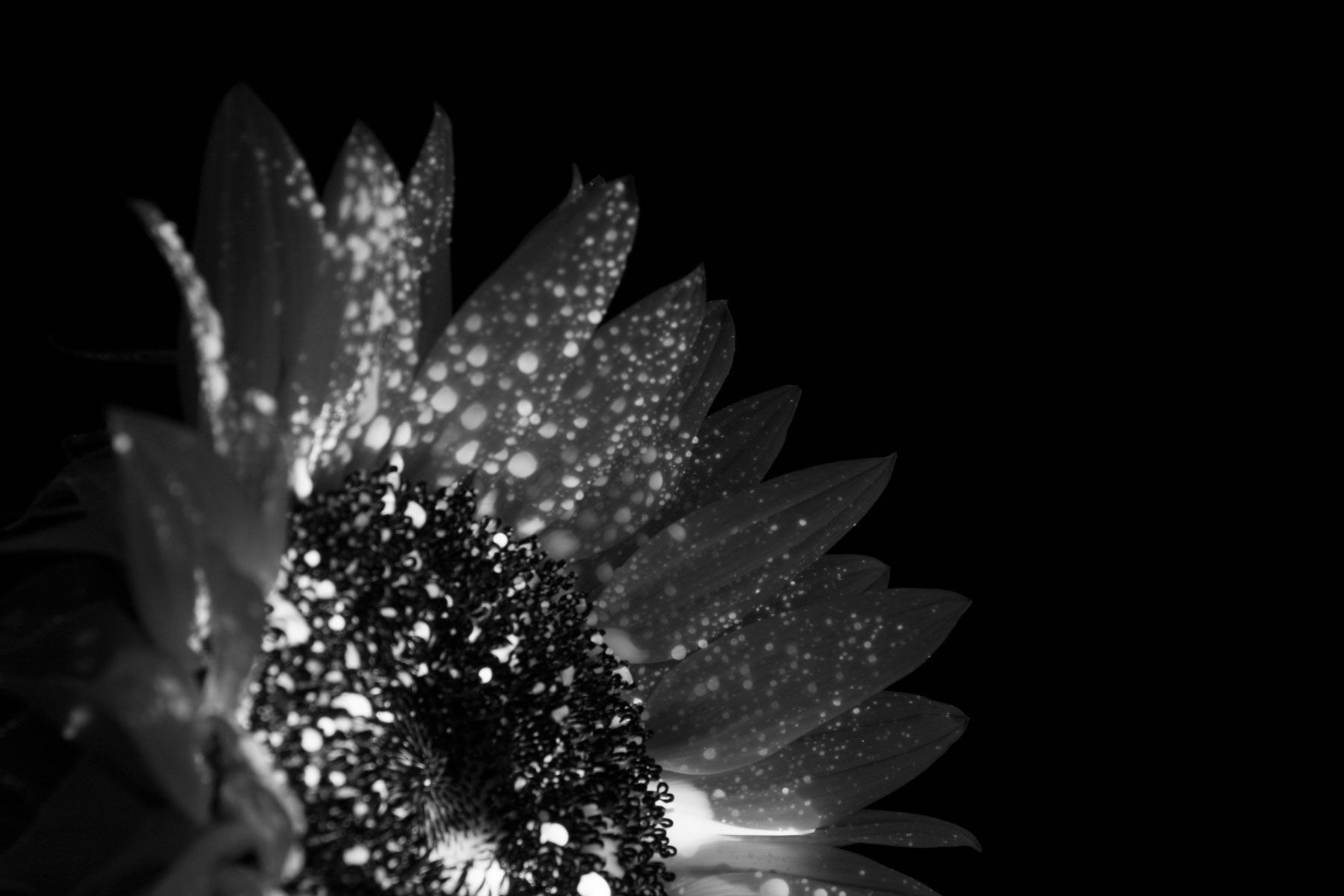 darkflower.jpg