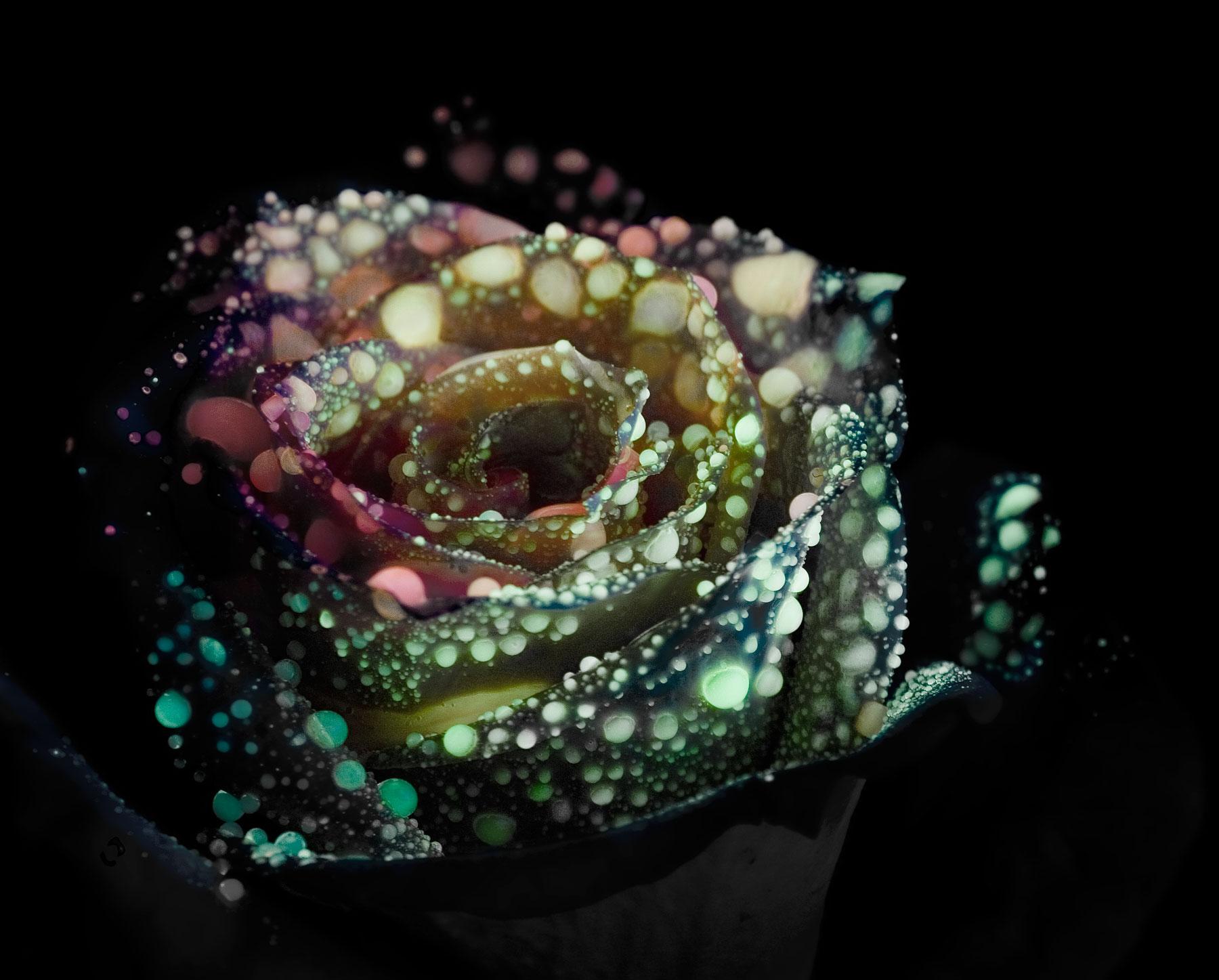 Rose-Print-copy.jpg