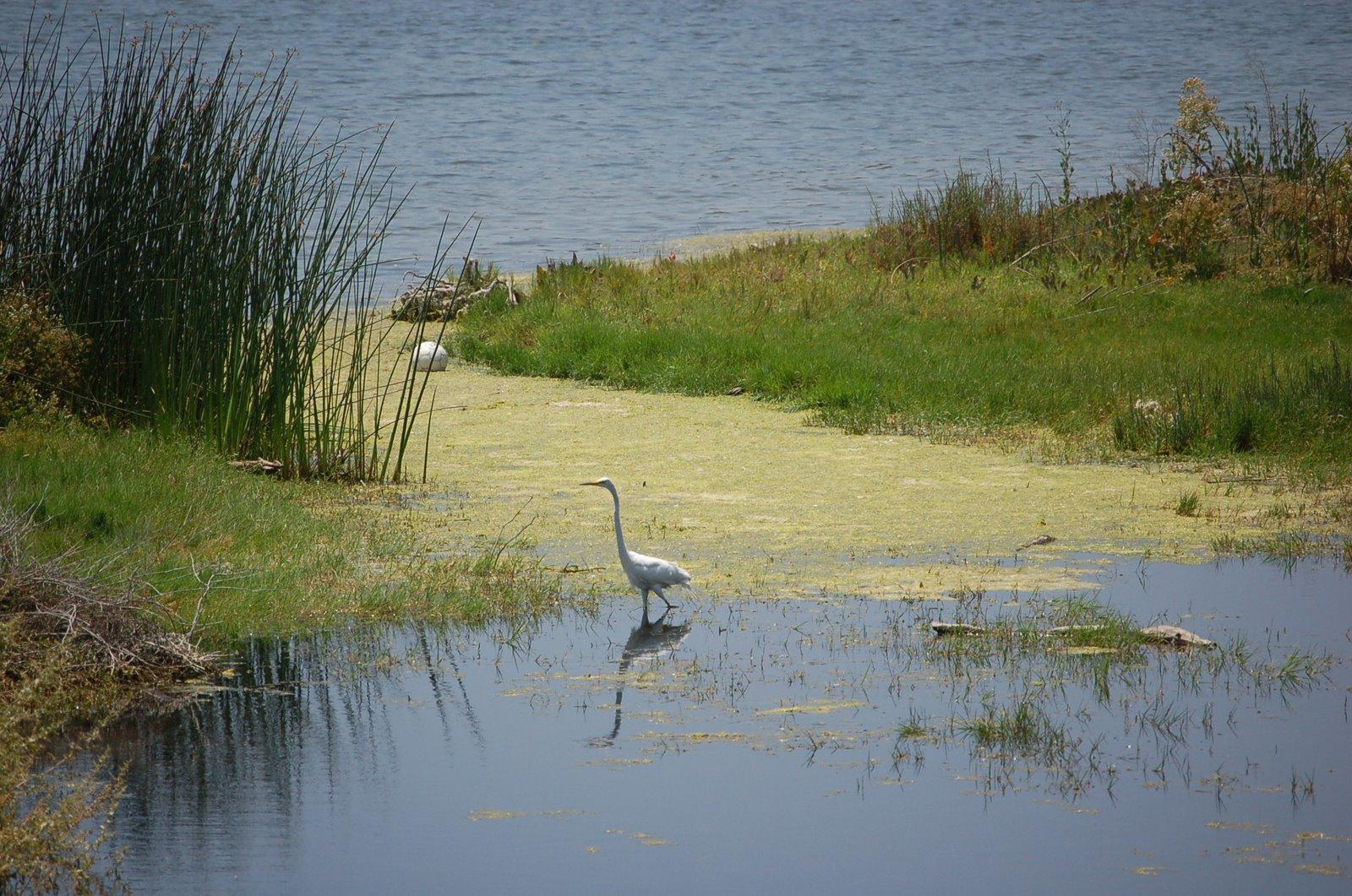 malibu-lagoon.jpg