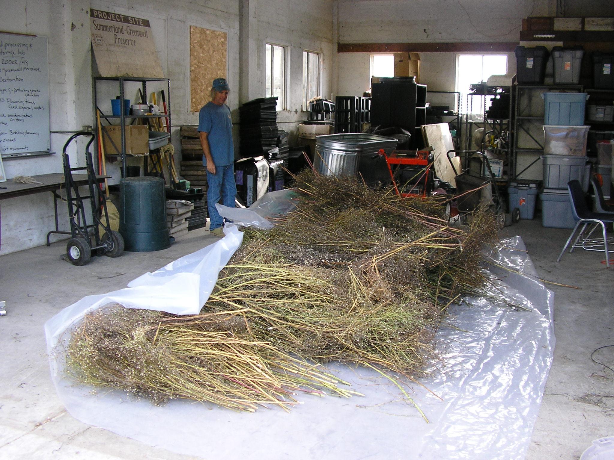 Nov 2. 05 aster seed cleaning 014.jpg