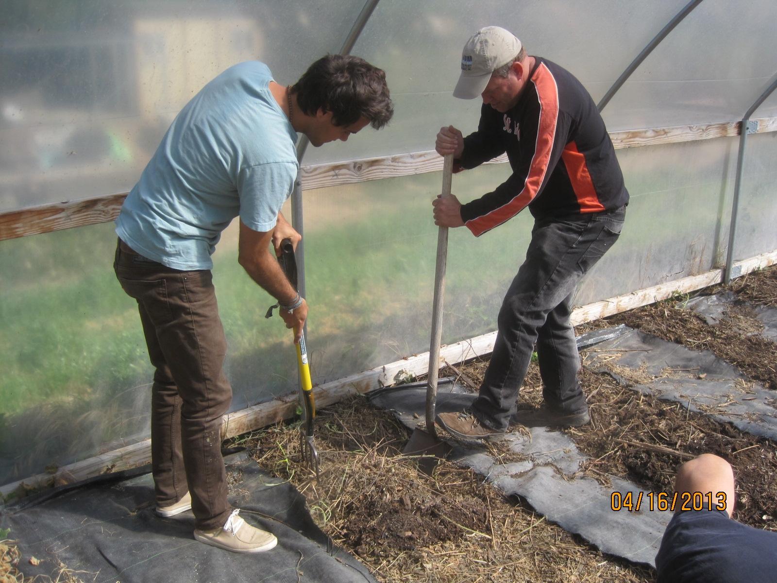 2013 April  tomatoe diggers.JPG