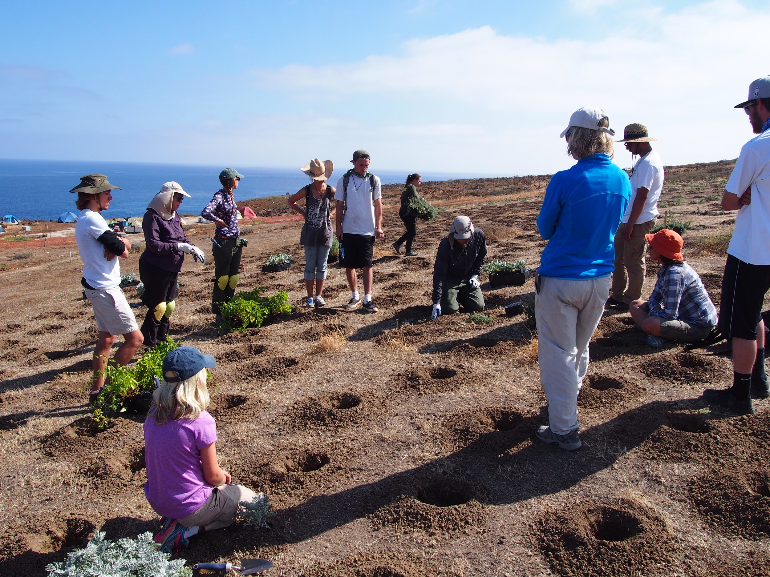 Horticulture students restore Santa Barbara Island habitats   see entire article at Santa Barbara City College Channels Newspaper