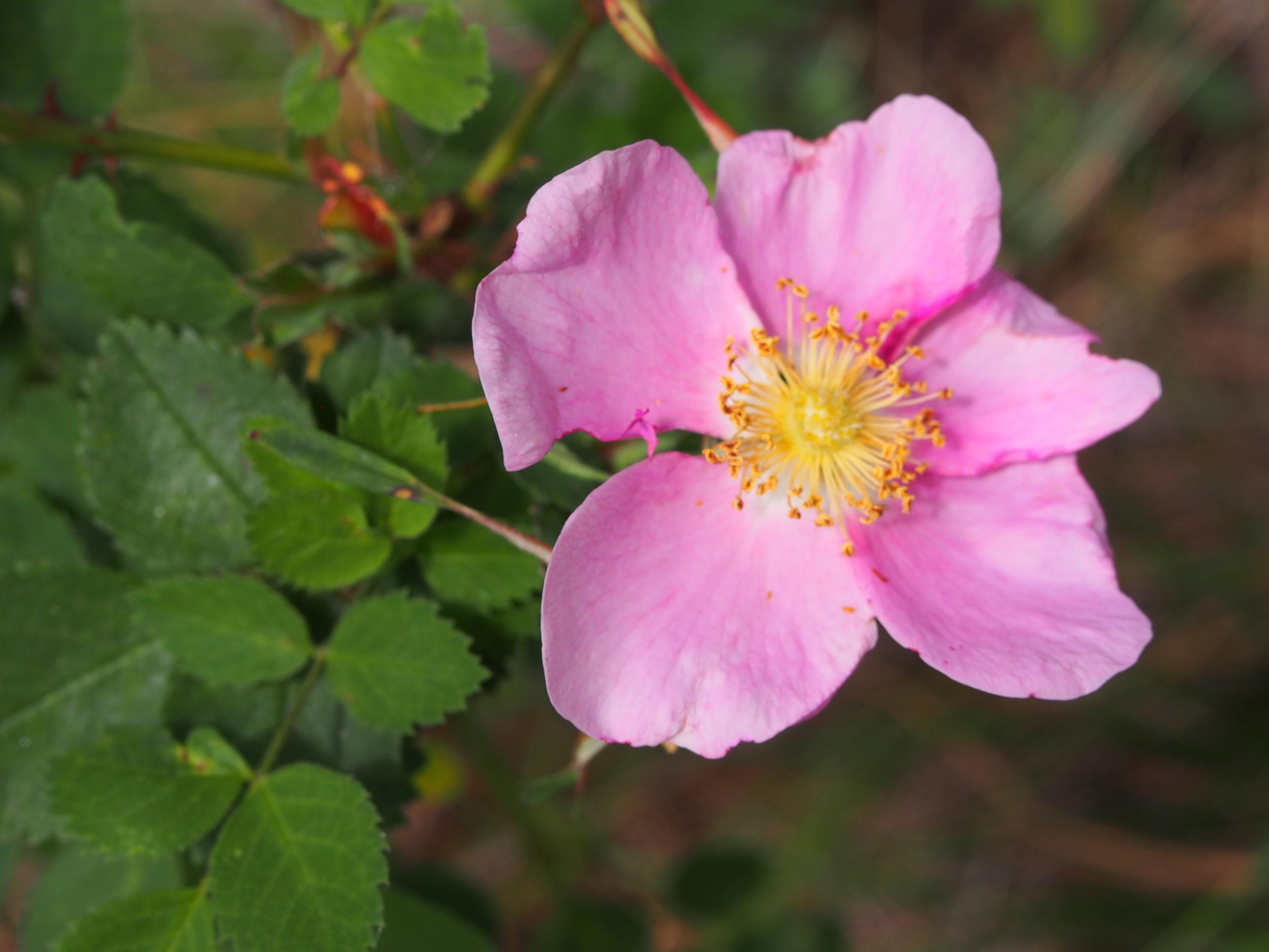 2015 June Oregon 791.jpg