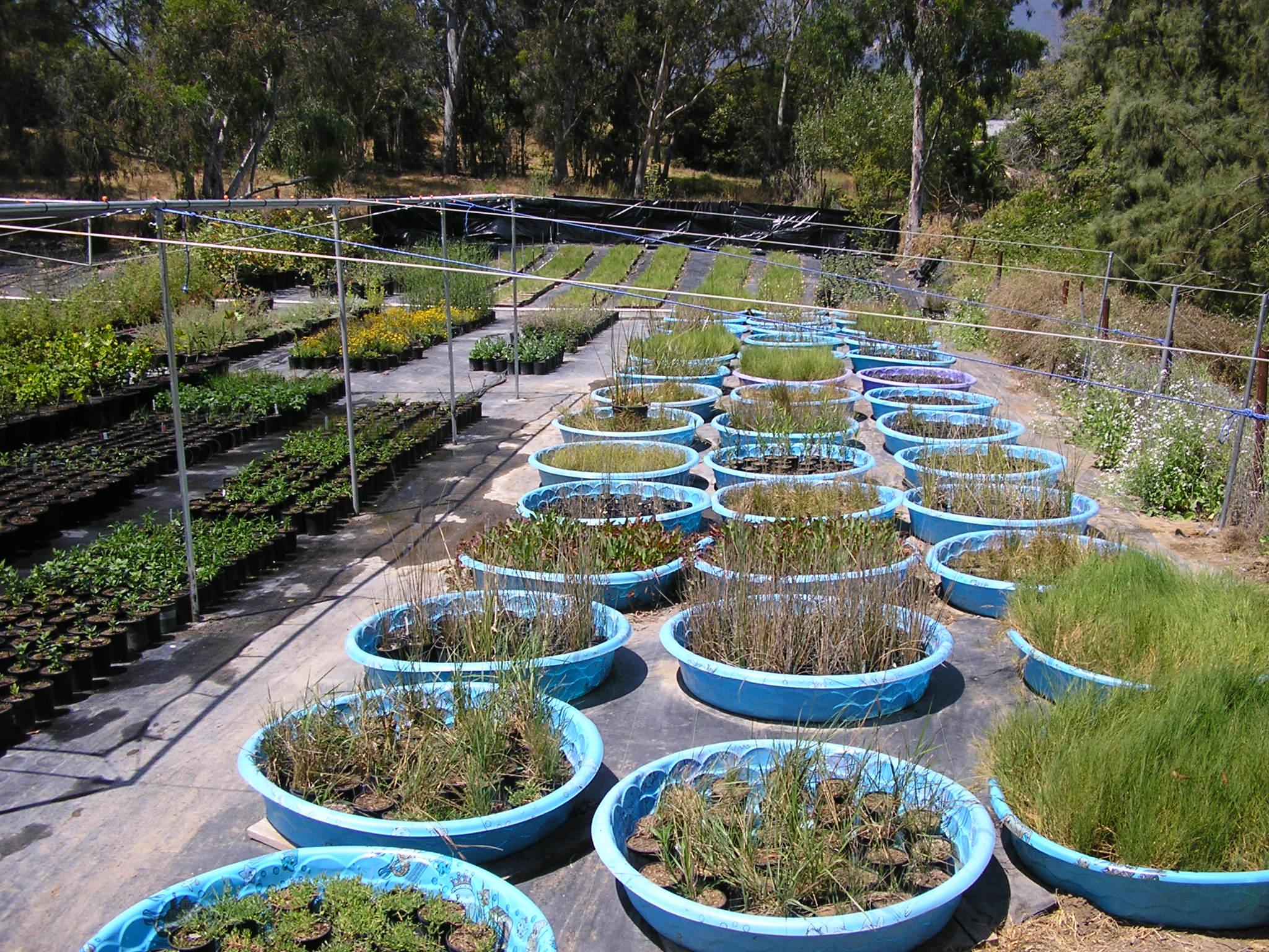 Native wetland plants.
