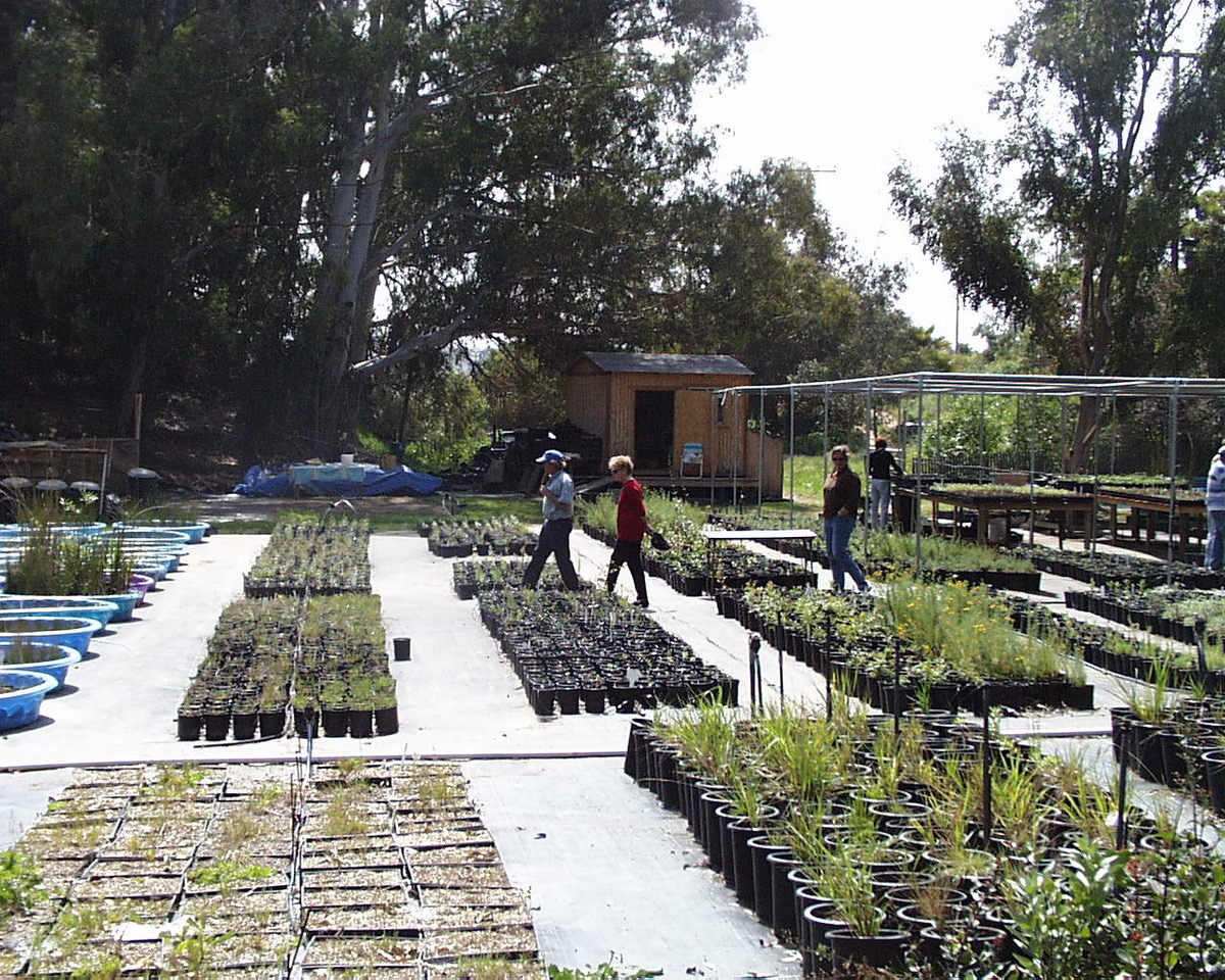 County Nursery in full production, circa 2010.