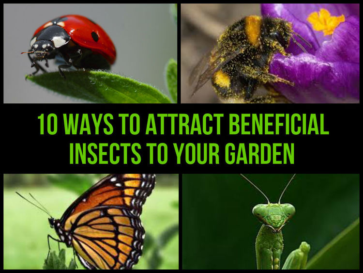 beneficial-insects.jpg