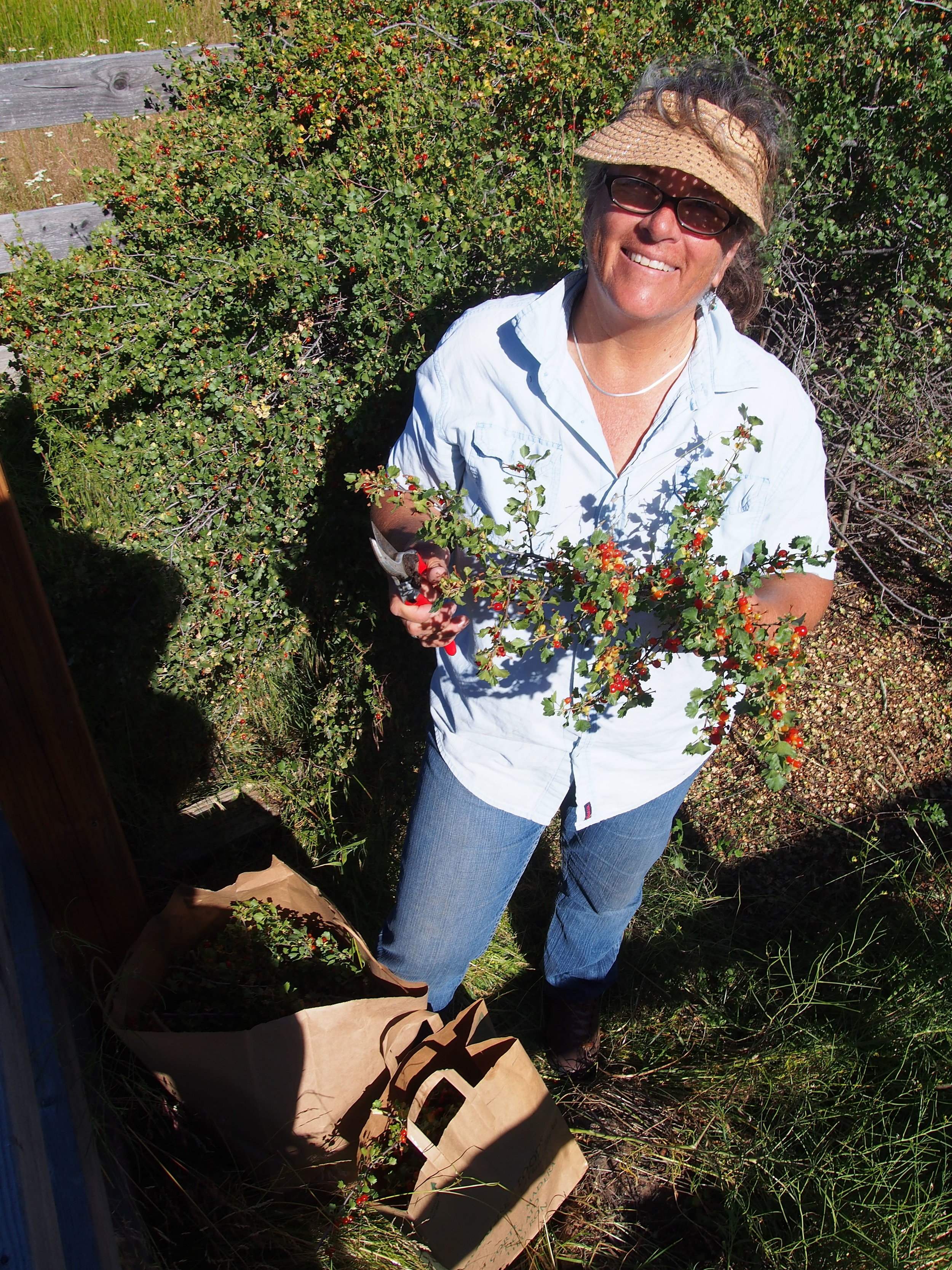 Karen harvesting wild currants.