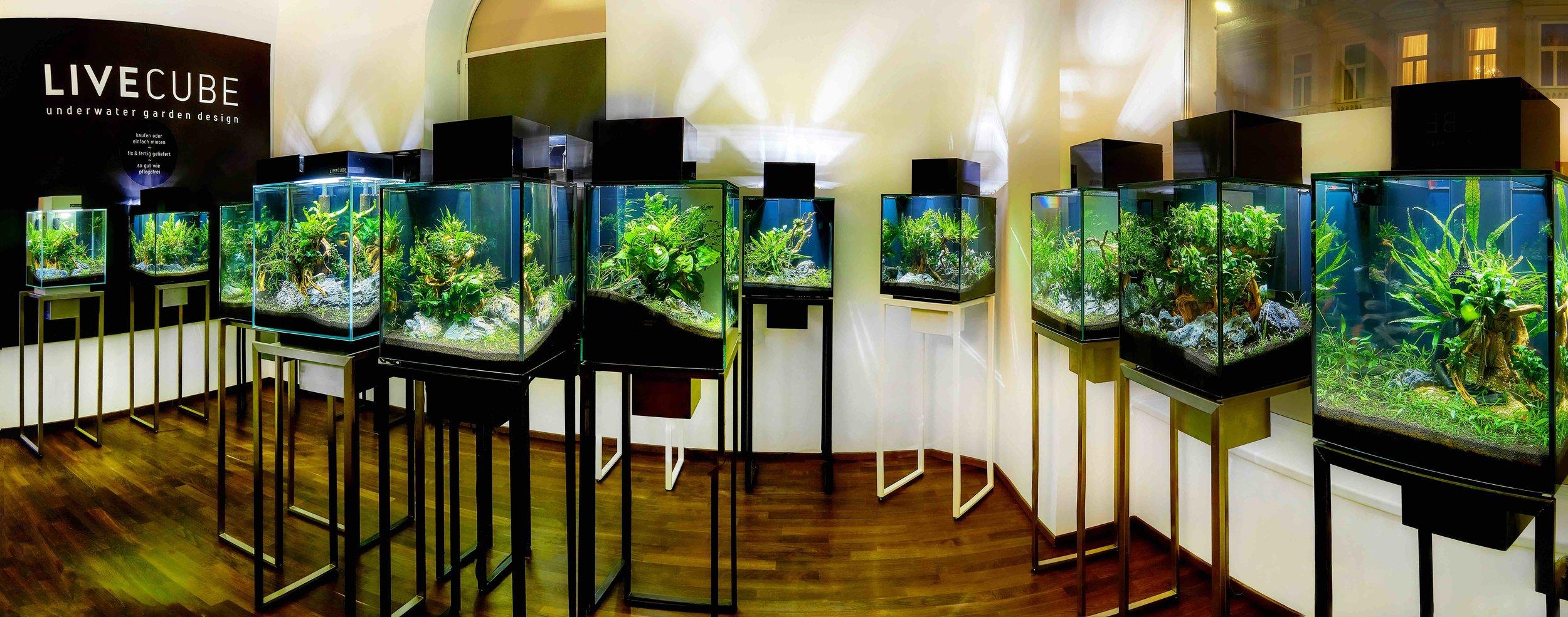 Livecube Galerie Aquarium