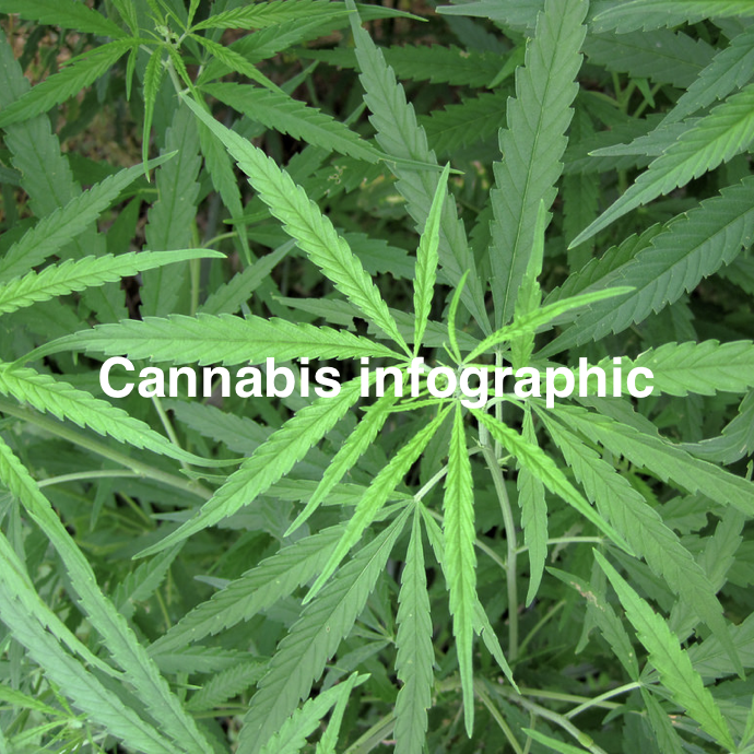 Cannabisinfographic.png