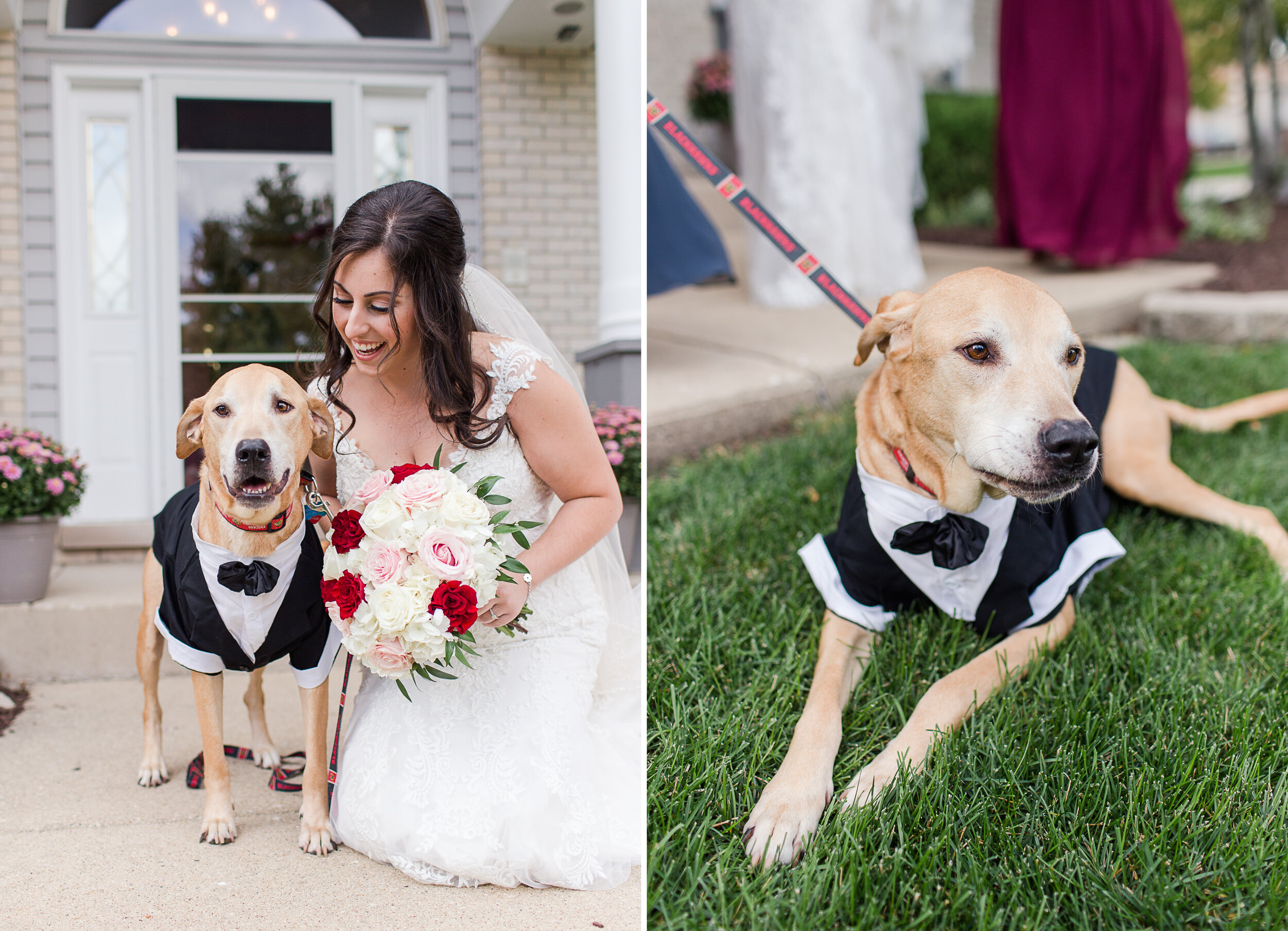 Remember Danielle's beloved dog Stanley from their engagement session?! Danielle was surprised with a visit from him… in a TUX!