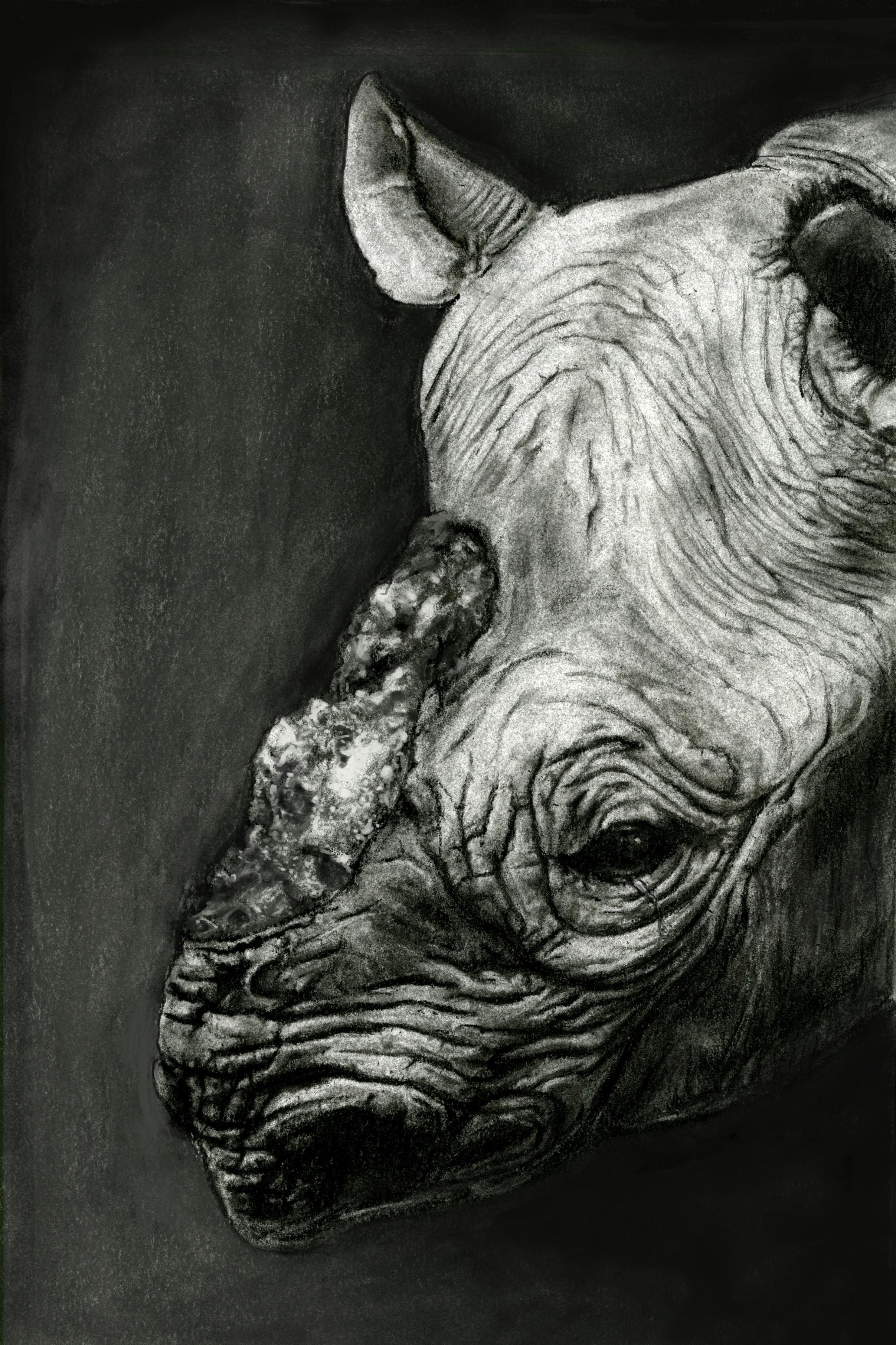 Endangered Species Series-Black Rhino