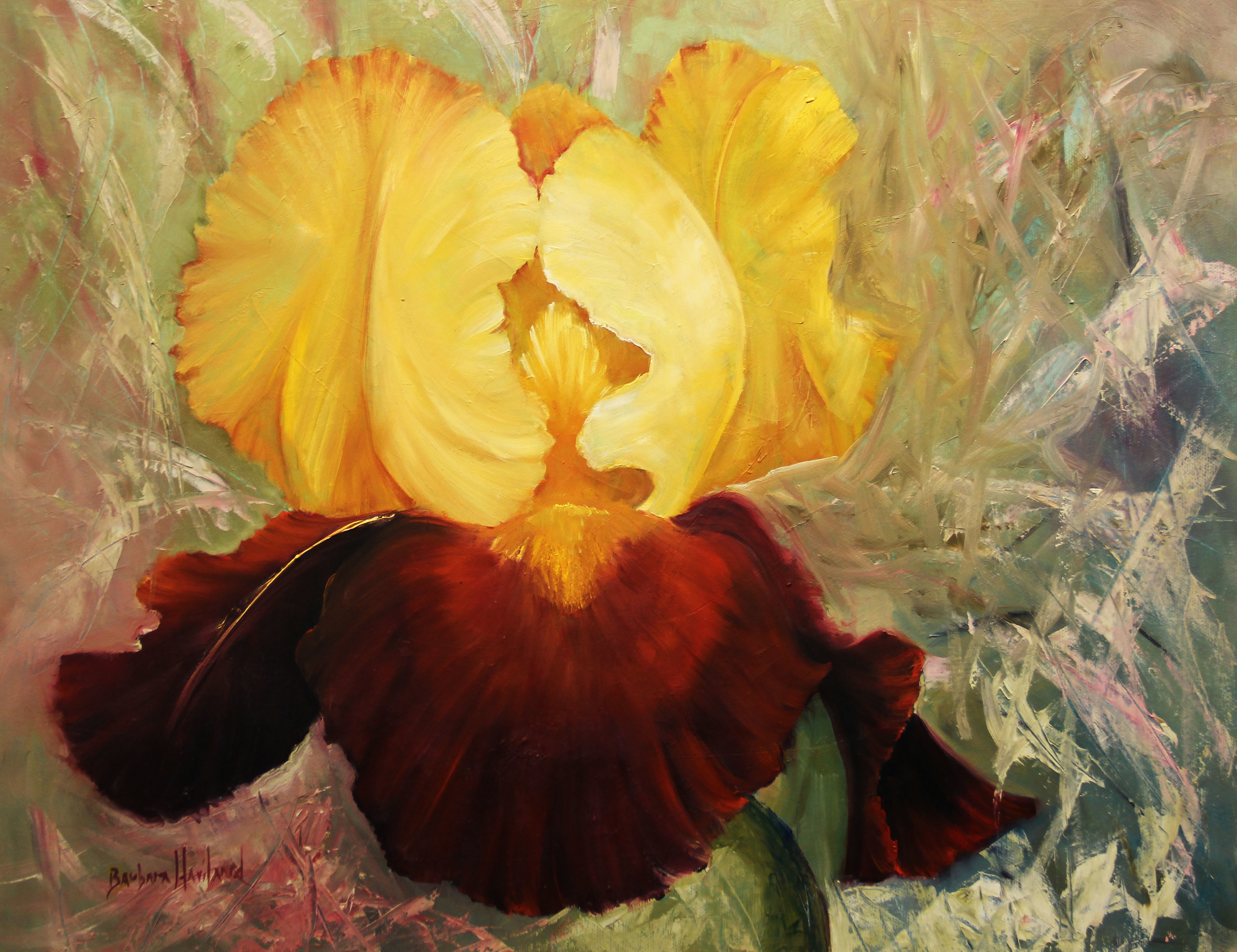 Barbara Haviland  Golden Iris  16X20  Oil