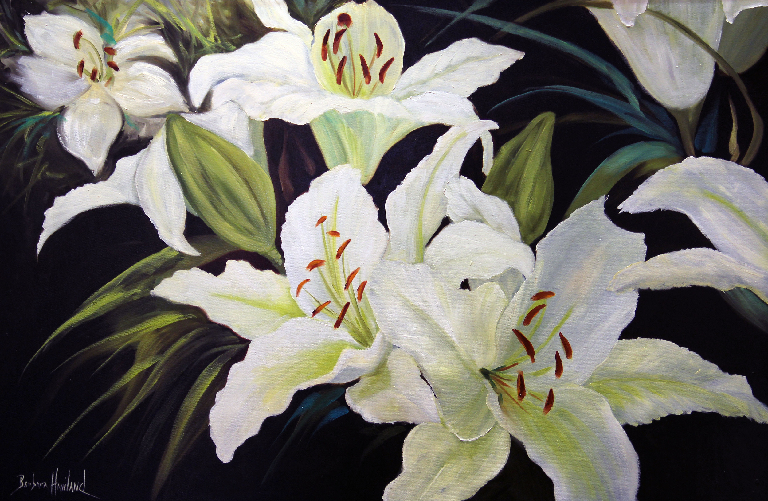 Barabara Haviland  White Day Lilies  36X24  Oil