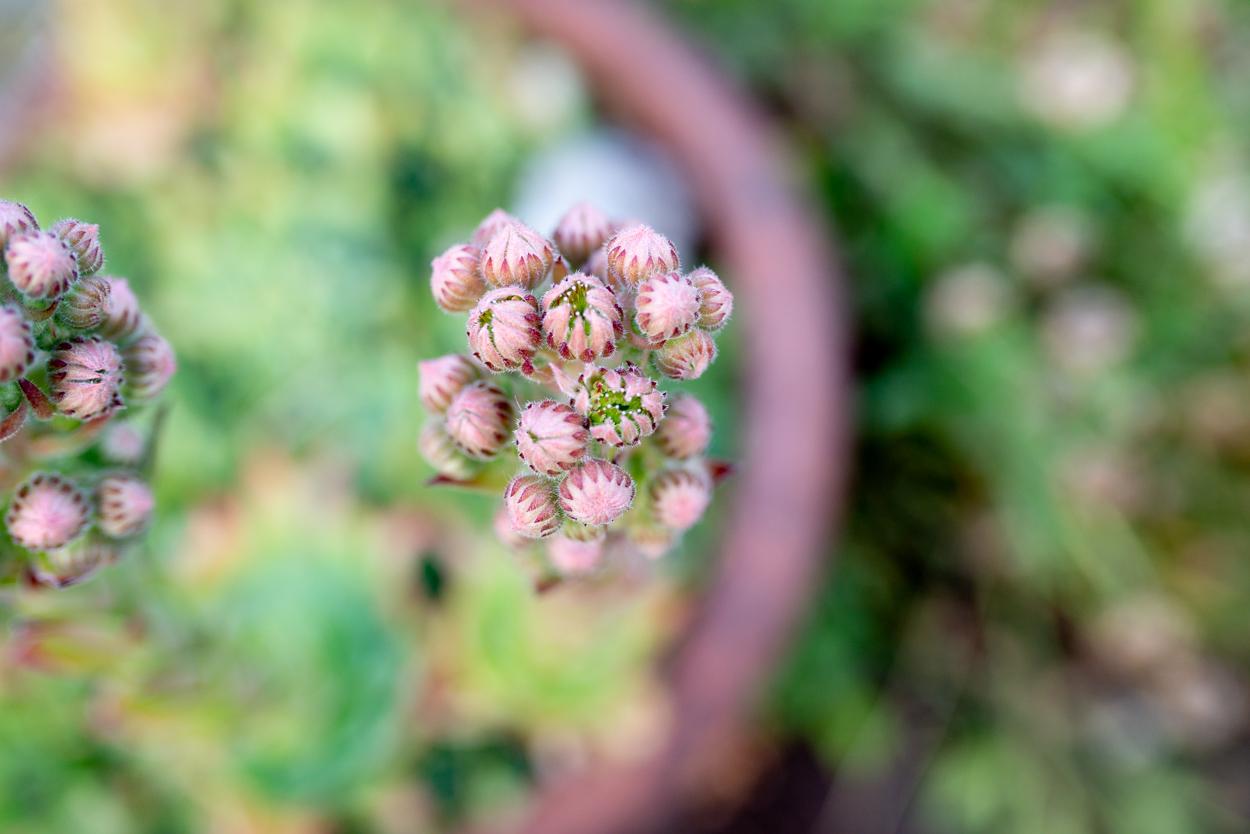 eden_swartz_photography_blog_7_12_19-8851.jpg