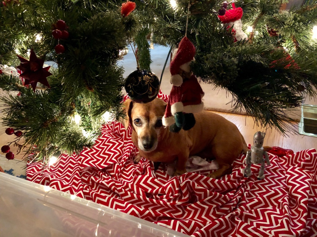 My job wouldn't be complete without including a nice image of ROSIE! Rosie was super excited to see our Christmas tree and decorations go up around the house. She was so excited in fact that she couldn't wait to make her own little bed under the tree! Love that little friend...
