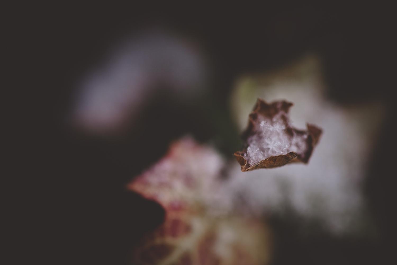 sarapattonphotography-flora-0004.jpg