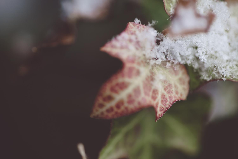sarapattonphotography-flora-0005.jpg