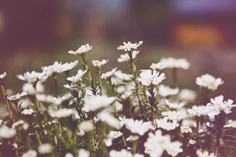 sarapattonphotography-flora-0033.jpg