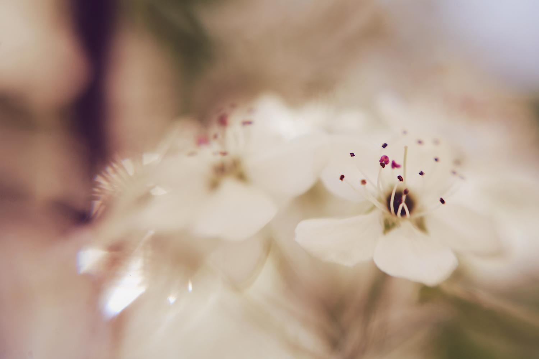 sarapattonphotography-flora-0087.jpg