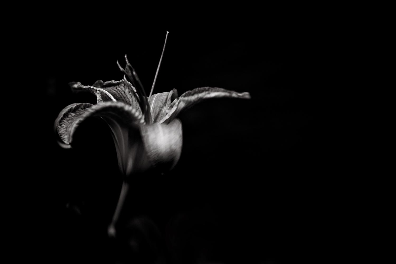 sarapattonphotography-flora-0114.jpg