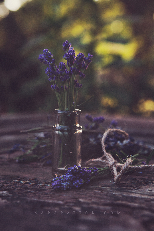 sarapatton-athensohiophotographer-lavender.jpg