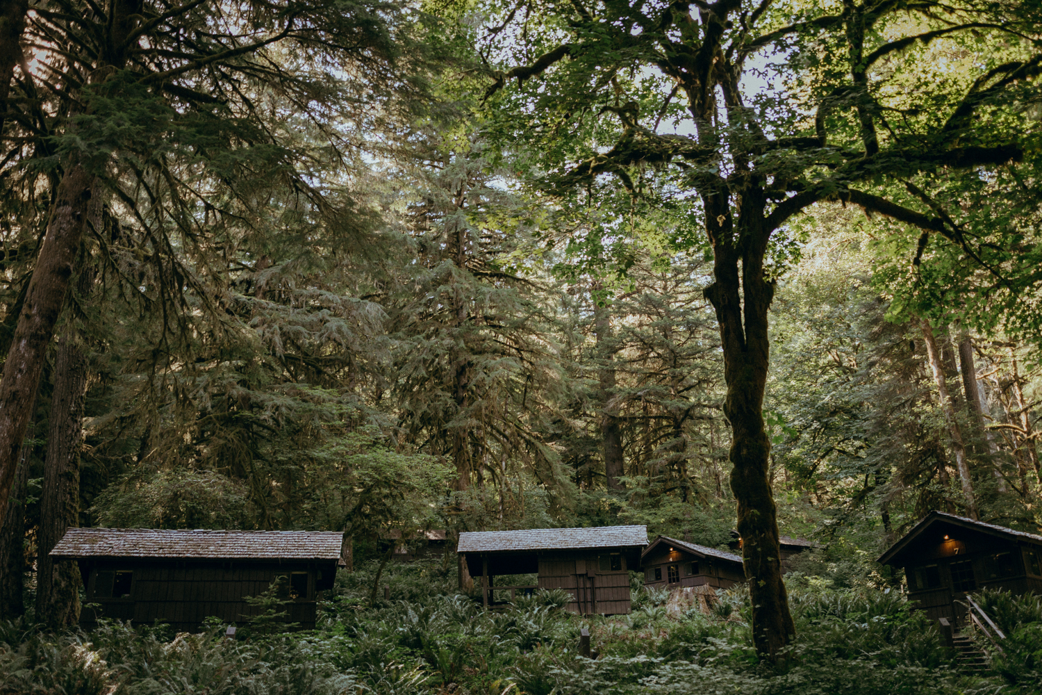 Silver Falls State Park Cabins