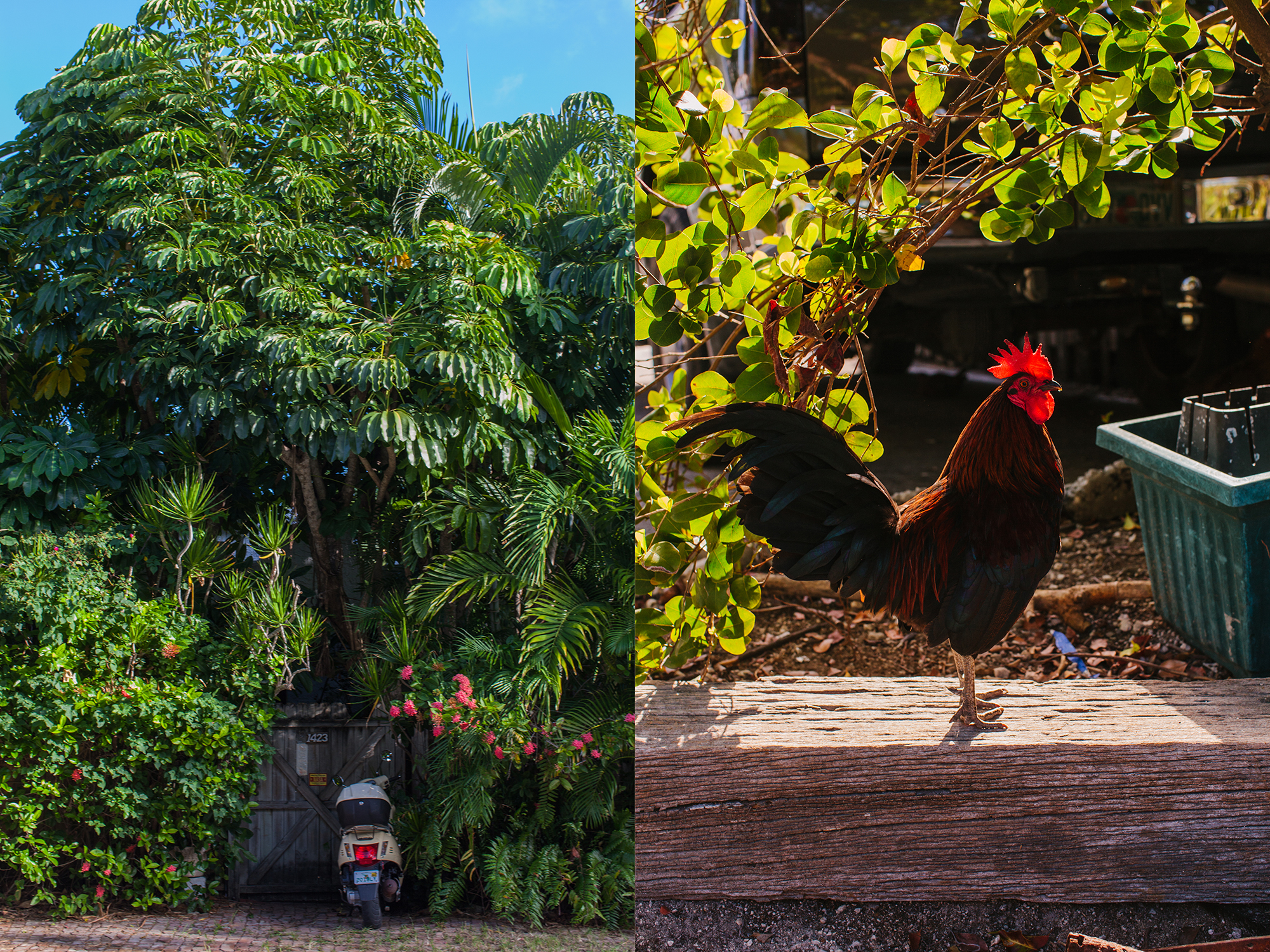 Common things that pop up on the road: Scooters and Chickens. Both equally very vocal.