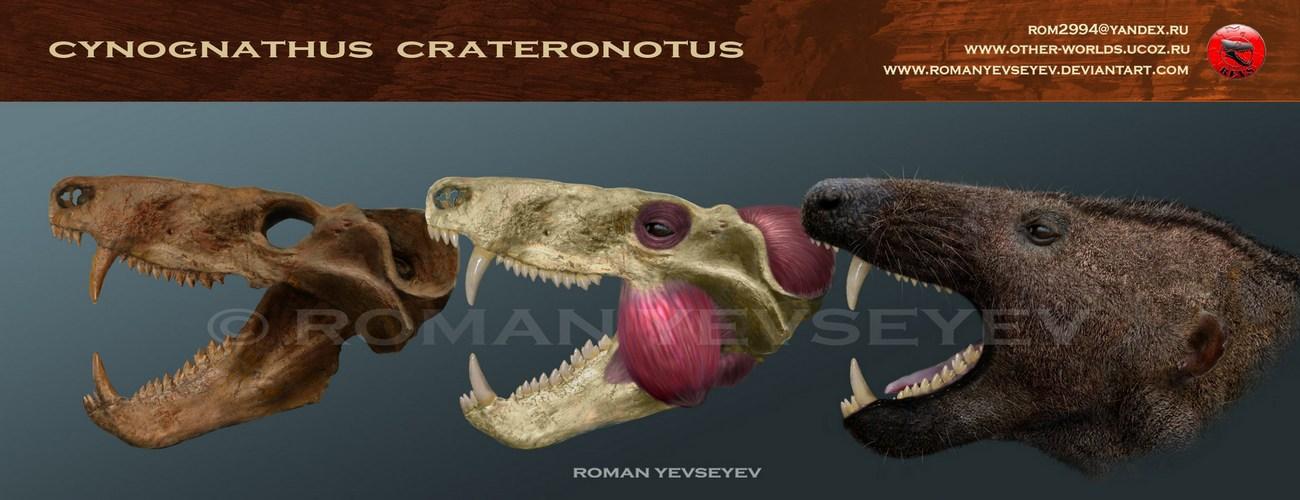 cynognathus_crateronotus_head_restoration_by_romanyevseyev-d4wi07j.jpg