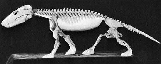 SkeletonEncyBrit.jpg