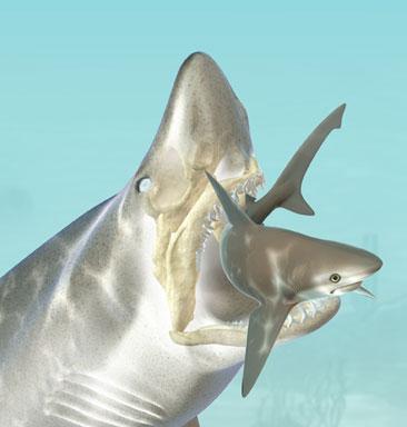 Sharkbite.jpg