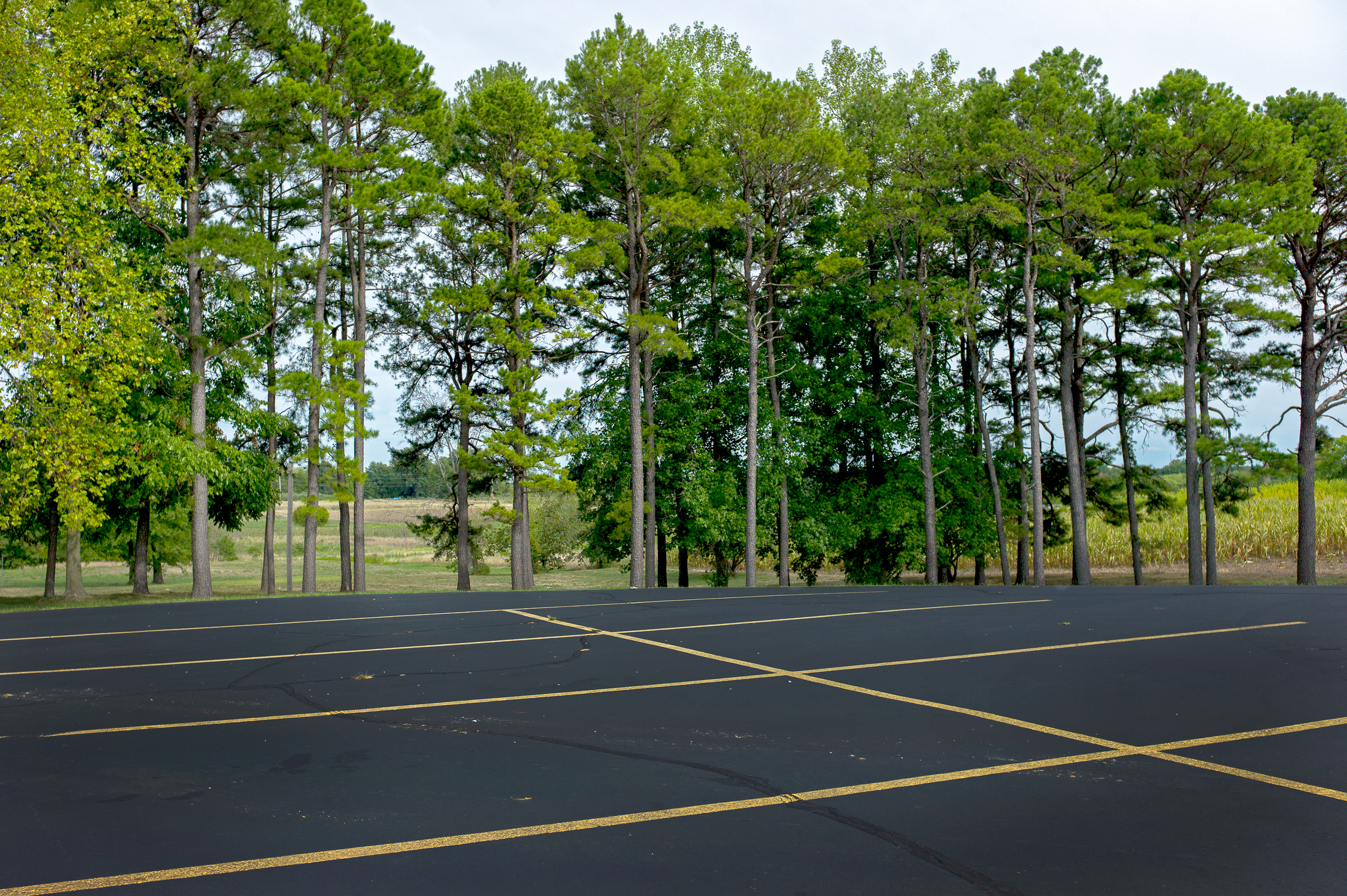 Conifer Trees and Parking Lot.jpg