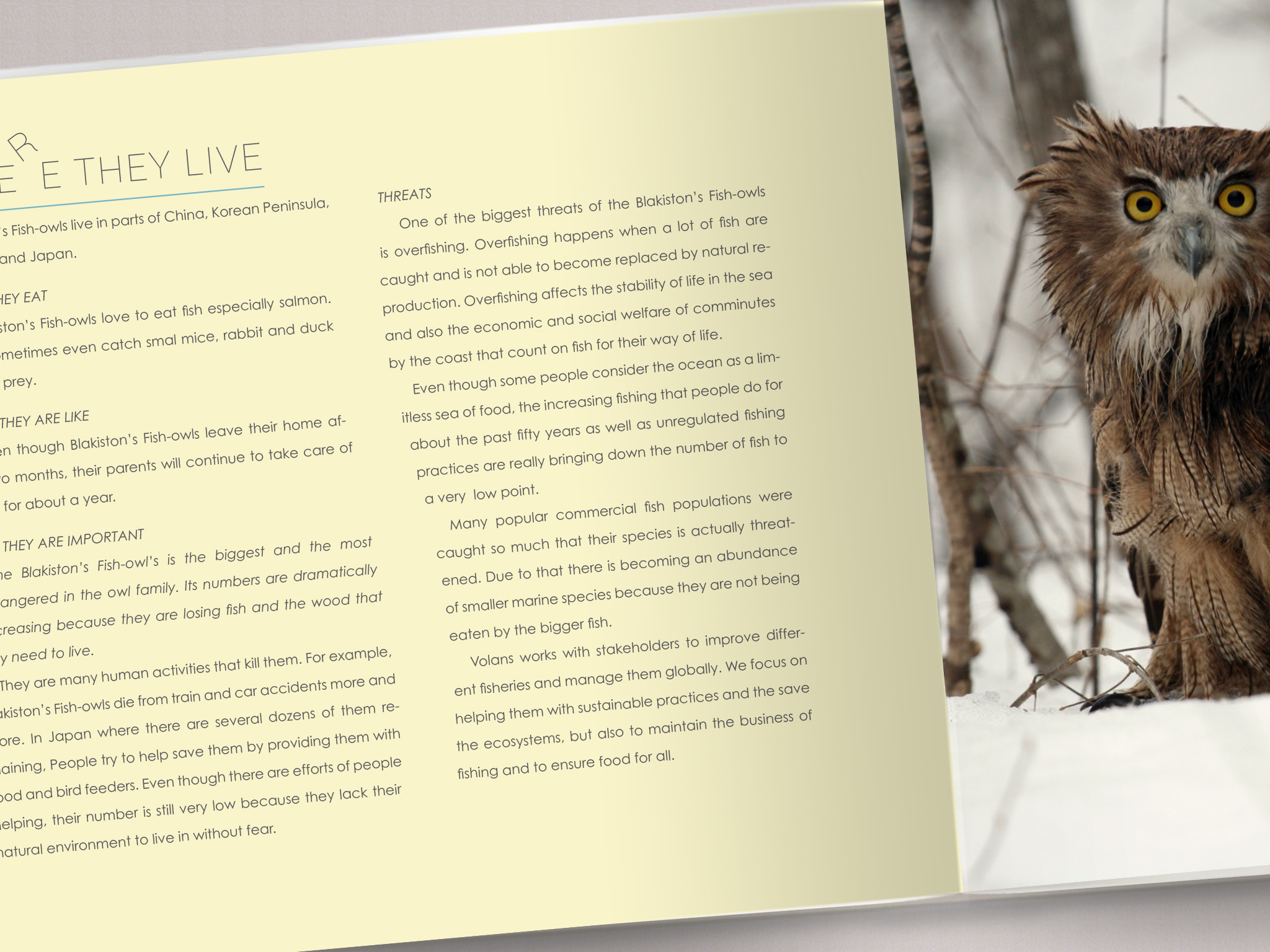 volans page 10.jpg