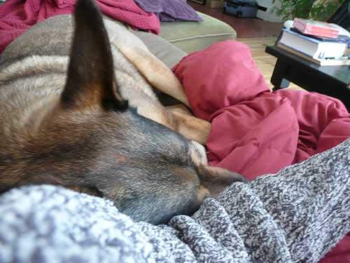 snow day, snoring dog