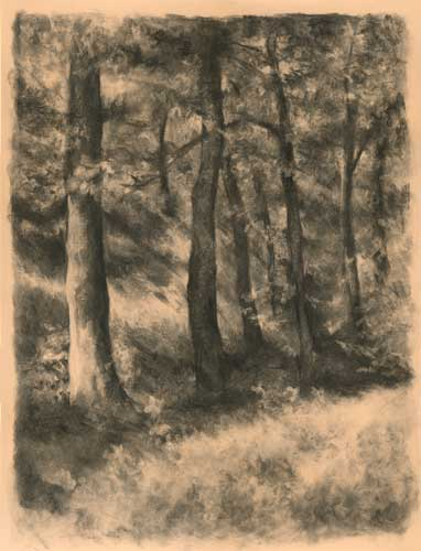 charcoal drawing of forest landscape