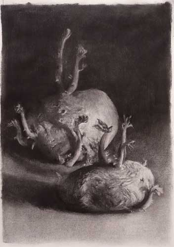old sprouting potatoes still life charcoal drawing