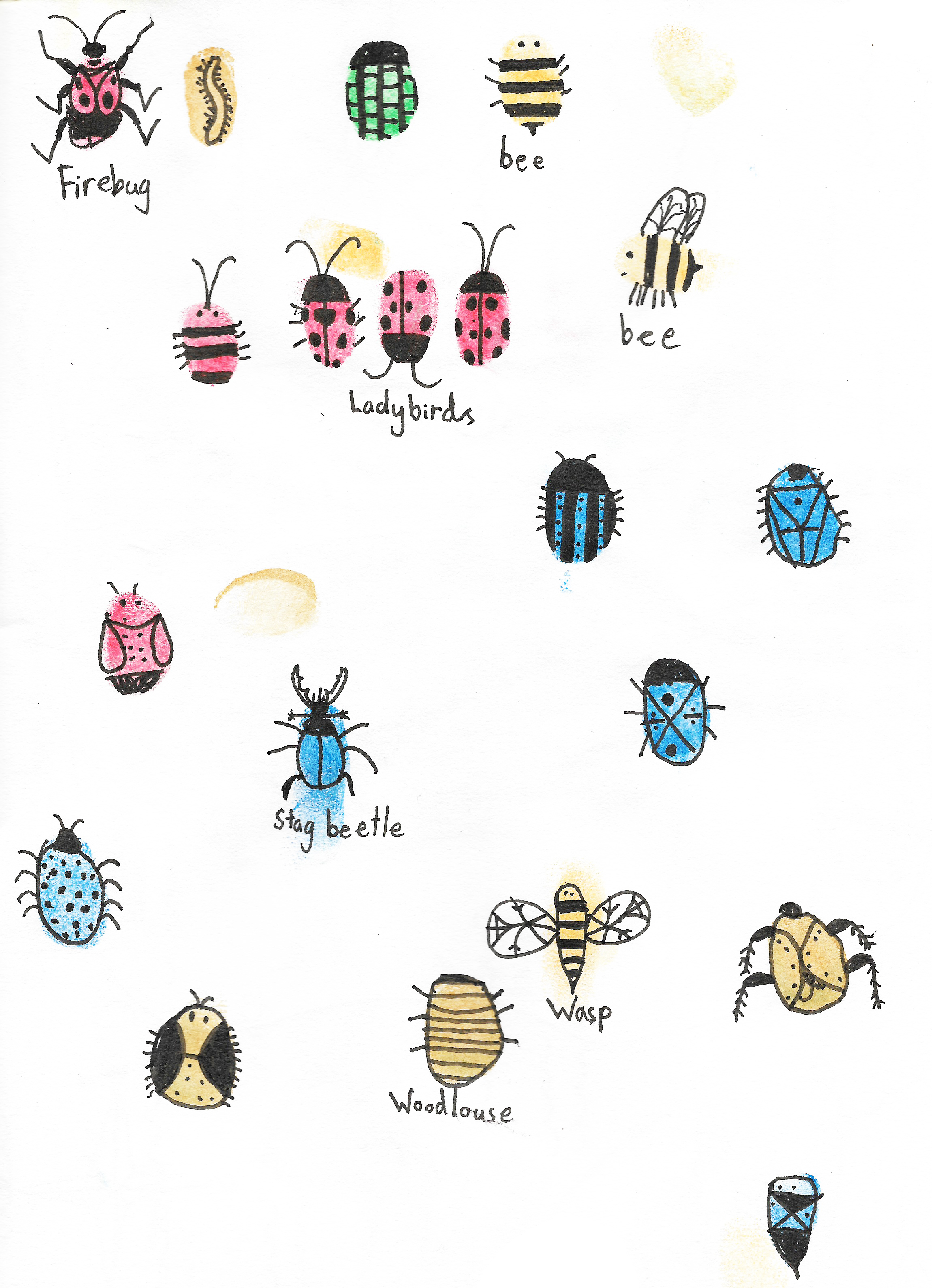 insects 1.jpeg