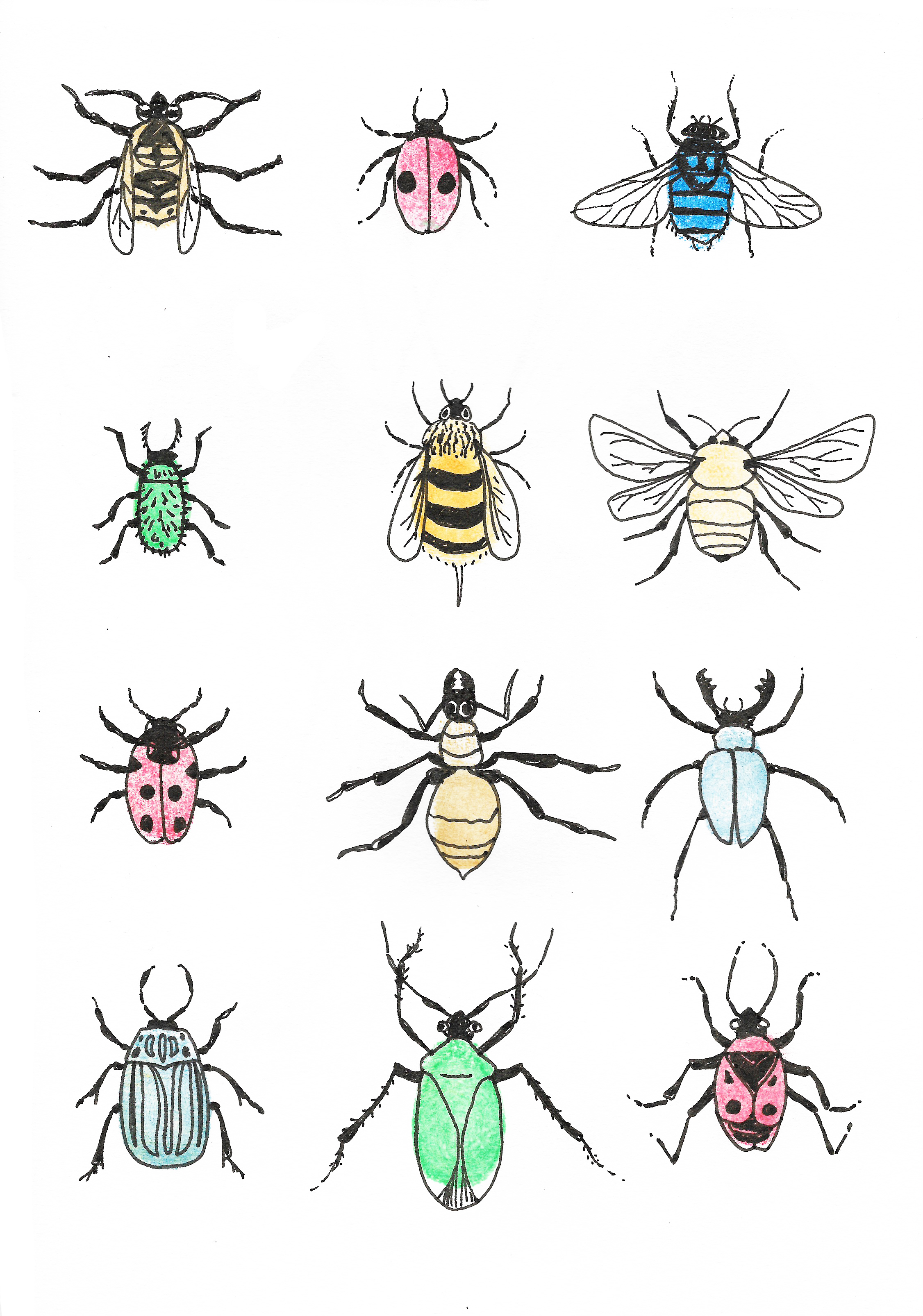 insects 2.jpeg