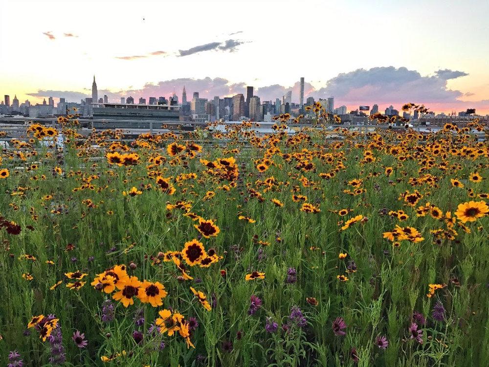 Kingsland Wildflowers.jpeg