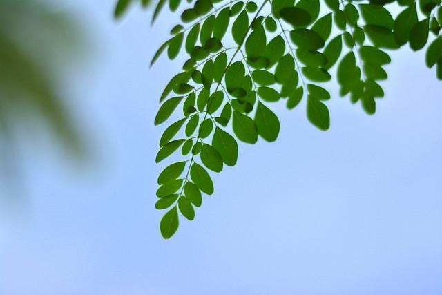 green-leaves.jpg