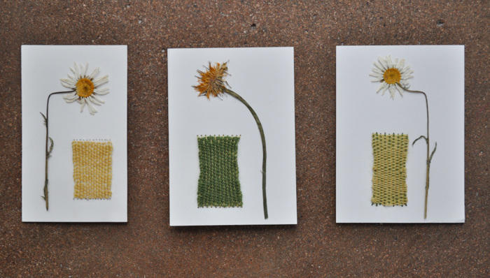 pressed daisies & dandelions with basic weaving.