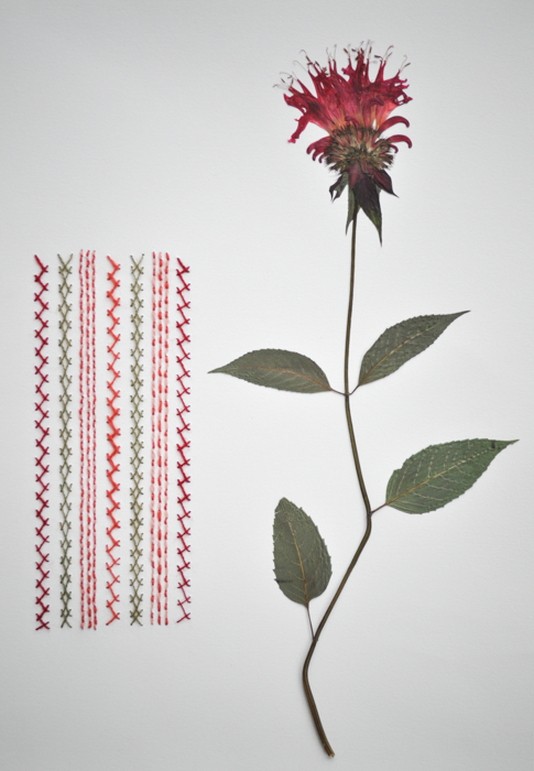 Bee Balm & Herringbone.