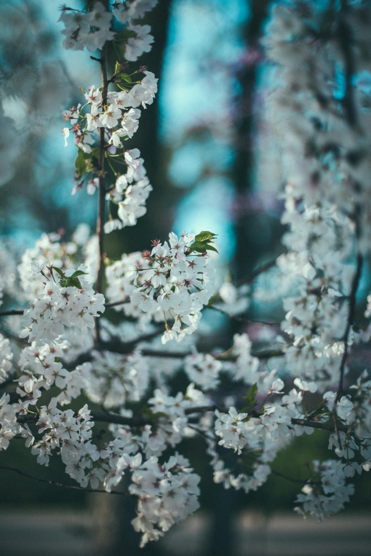 spring bloom-4.jpg