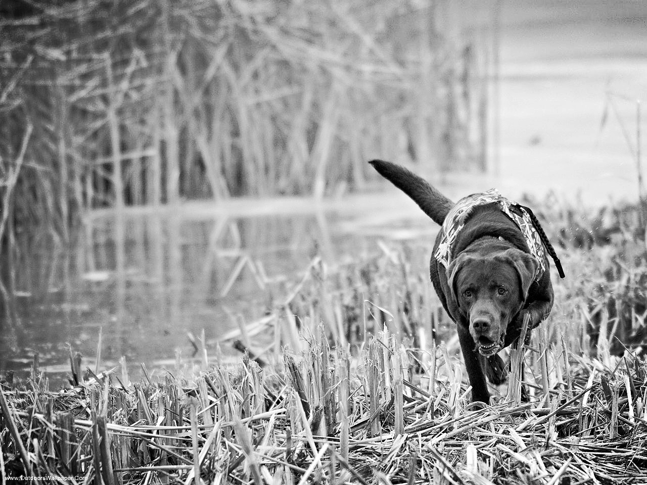 duck-hunting-wallpaper-5.jpg
