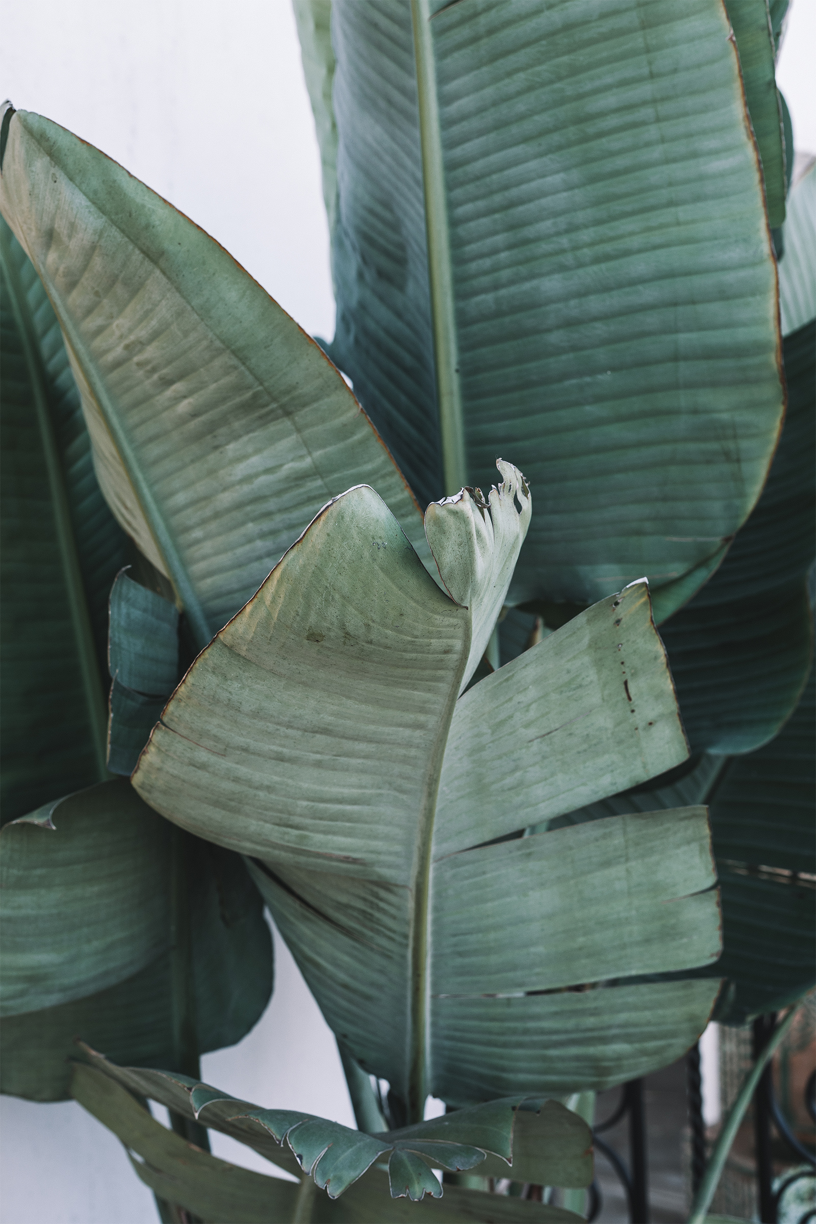 Tropical Palm Leaves / Texture / Nature Photography / Kelly Fiance Creative