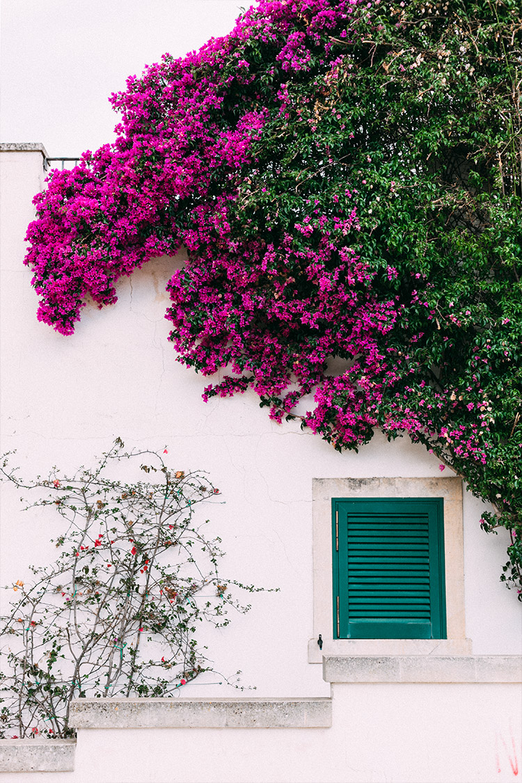 Bougainvillea Outdoor Patio / Puglia Italy / Travel Photography Inspiration / B / Kelly Fiance Creative