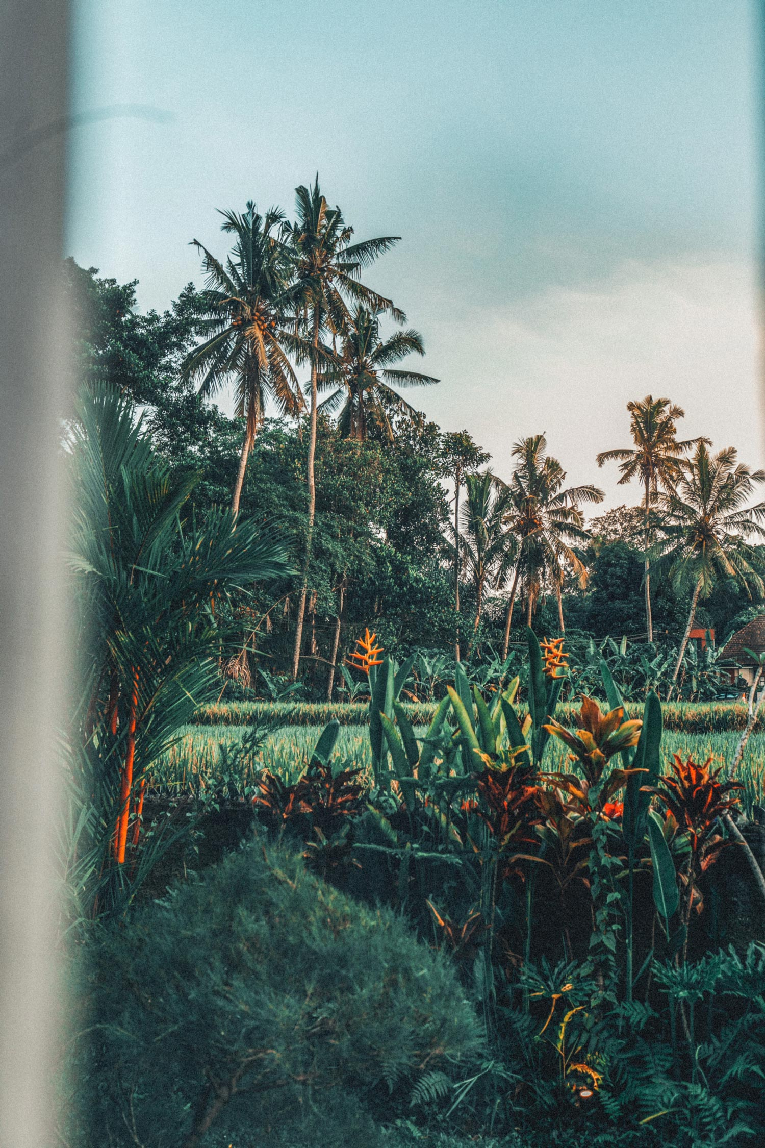 bali-indonesia-yoga-retreat-travel-photography-4.jpg