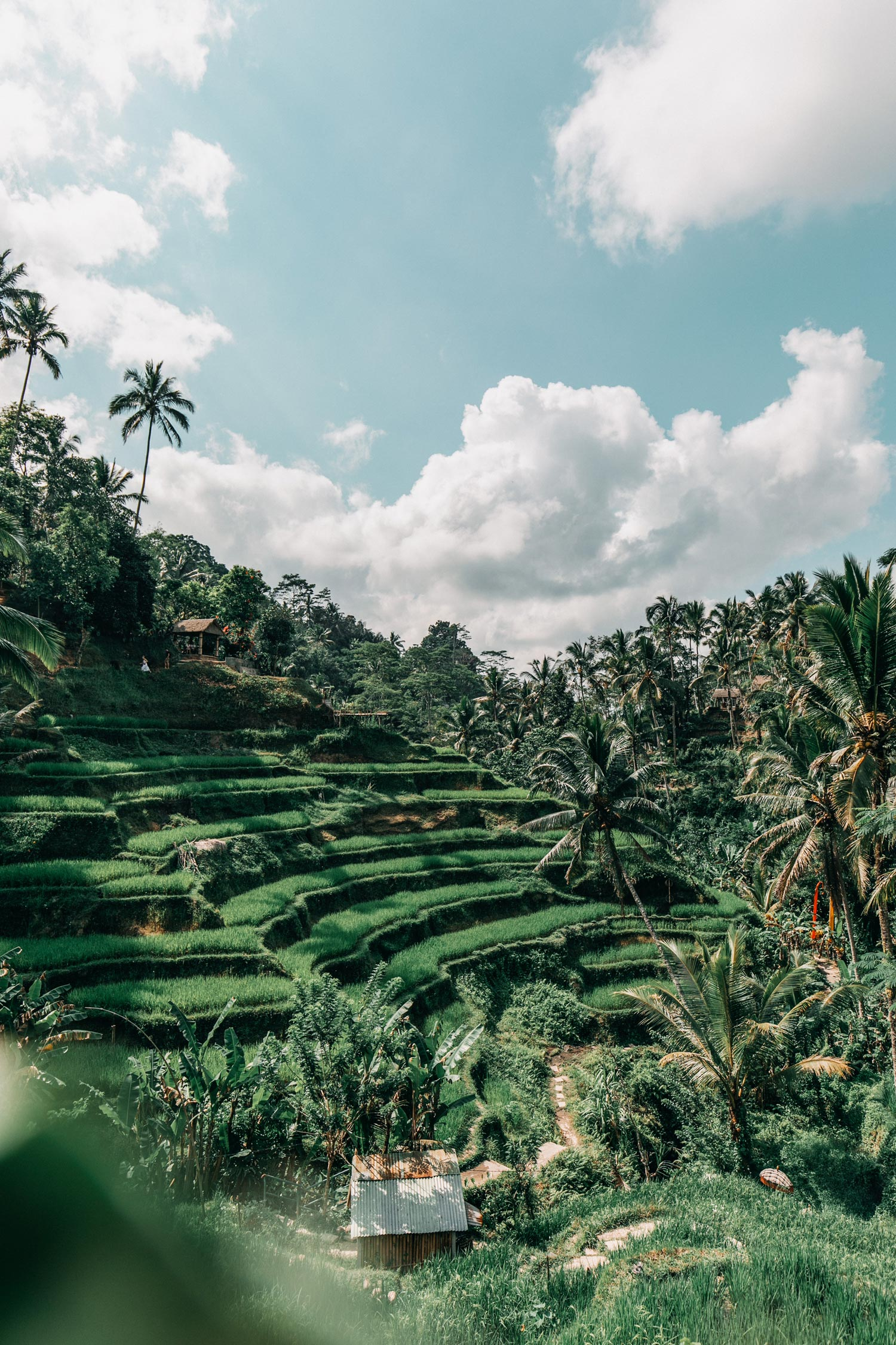 bali-indonesia-yoga-retreat-travel-photography-20.jpg