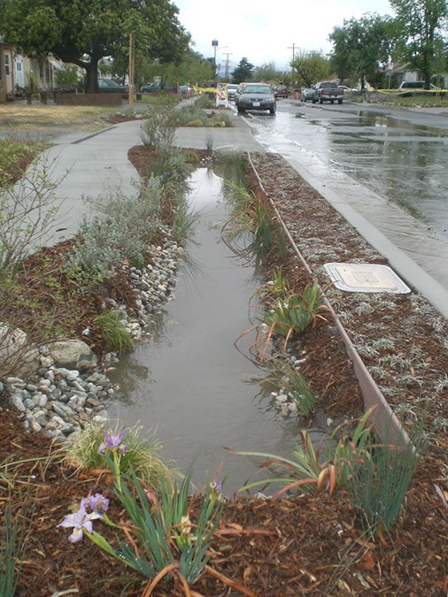 This water harvesting basin in the parkway is utilizing rainwater run-on to infiltrate water to plant root systems.