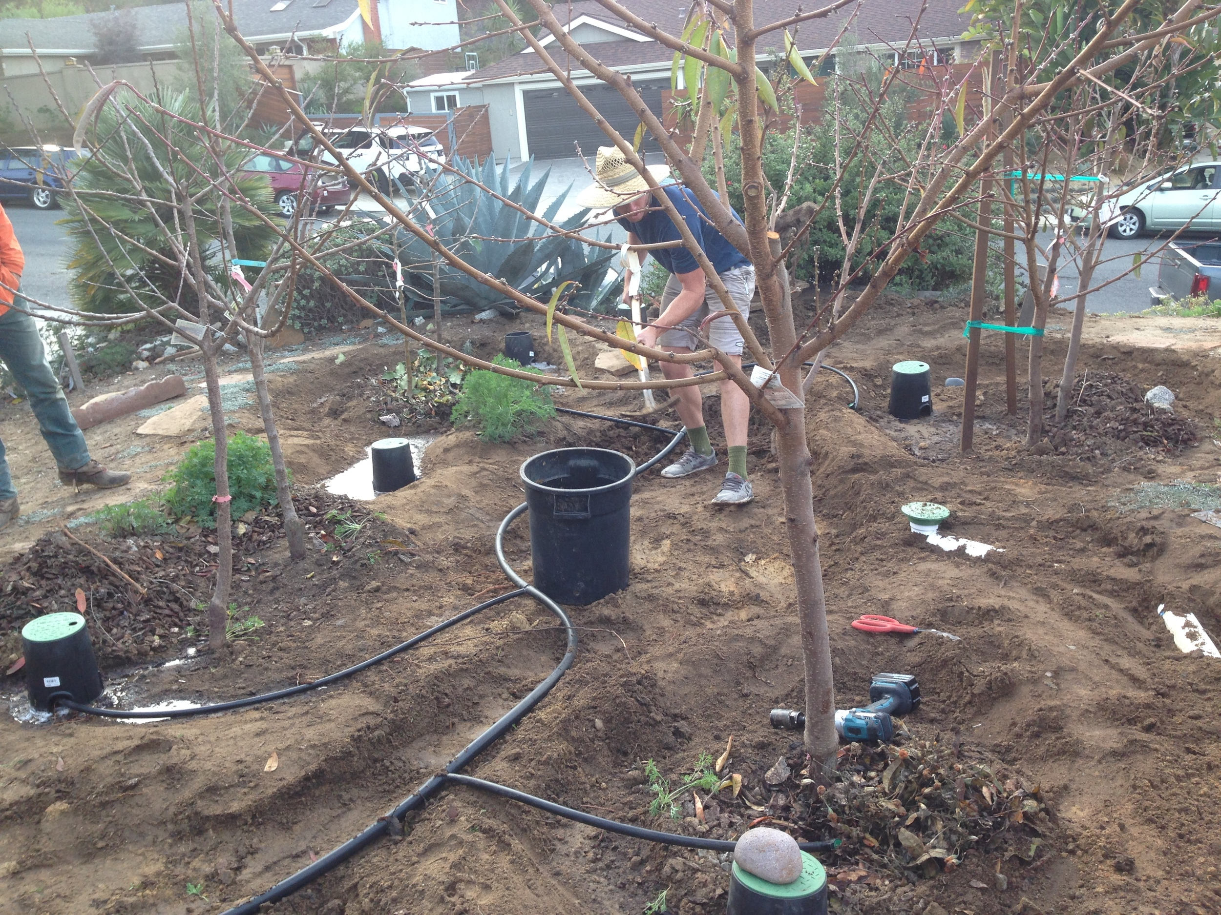 A simple laundry to landscape system can water a small orchard.