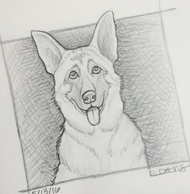 One more day, one more dog. #sketch #dogstagram #drawingoftheday #dogoftheday #dailydog #illustratorsoninstagram